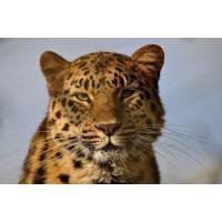 Фотообои с животными ZHV18